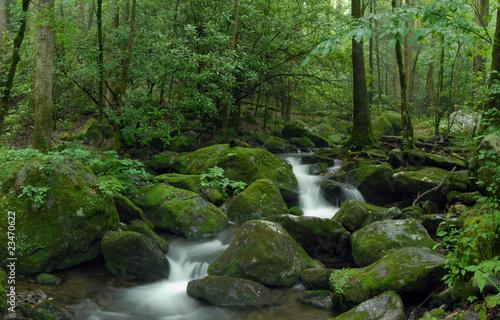 Mossy creek panorama