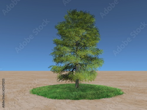 Green tree on a patch of grass in the desert