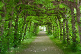 Green Tunnel - 23487617