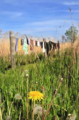 Wäscheleine in der Natur