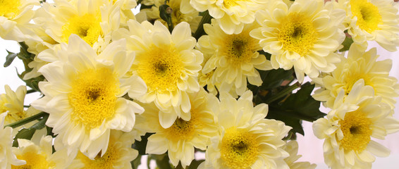 bouquet from white chrysanthemums.