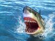 Shark attack - 23498662