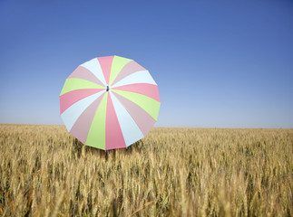 umbrella at wheat field