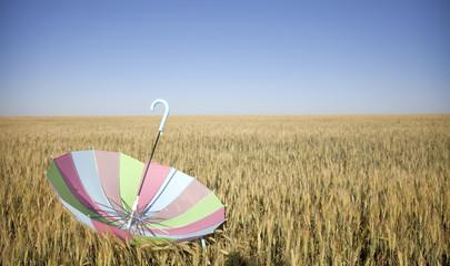 umbrella at wheat field