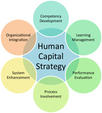 Human capital business diagram