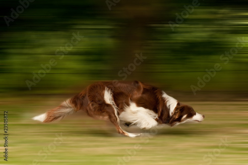 large dog running motion blur