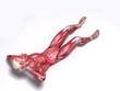 Fitnesstraining - Bauchmuskeltraining