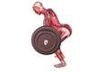Fitnesstraining - Hantelstemmen