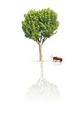 abeille arbre environnement avenir rôle insecte destinée pollu
