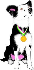 Campionessa di Agility Dog