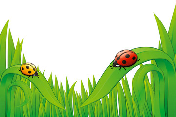 Vector Ladybugs on grass.