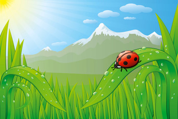 Vector grassfield landscape with ladybug