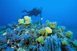 Female diver exploring colorful soft corals