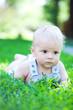 cute boy in green grass