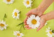 Hands with Chamomile flower