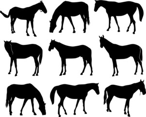 horses vector silhouettes
