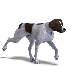 German Short Hair Dog. 3D rendering with clipping path and shado