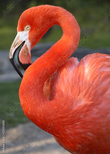 Leinwandbild Motiv Flamingo