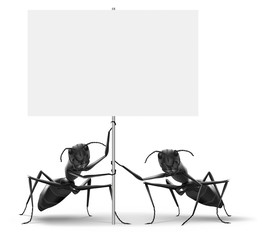 ants holding blank protest or advertising placard