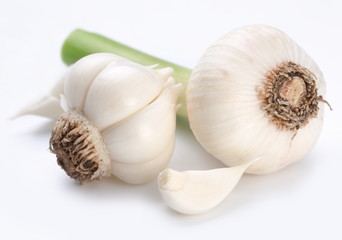 young garlic on a white background