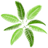 Fototapety Set of palm leaves. Vector. Make your own palm.