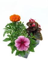 plants de plantes à planter