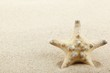 Starfish on sand beach