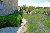 Fototapety jardin lavandes