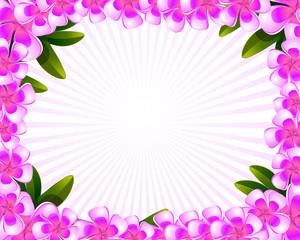 frangipani plumeria flowers frame
