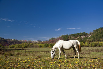 horses that graze
