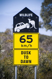 Car versus the Kangaroo in a drivers warning sign in Australia poster