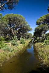 Toscana, Parco della Maremma, la pineta 2