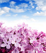 lilac and blue sky