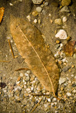Detail of decaying leaf underwater poster