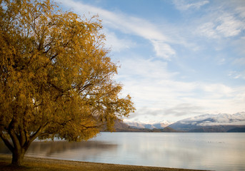 Mountains at sunrise with large autumn tree and lake