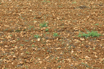 Typical red agricultural soil strewed with pebbles near the city