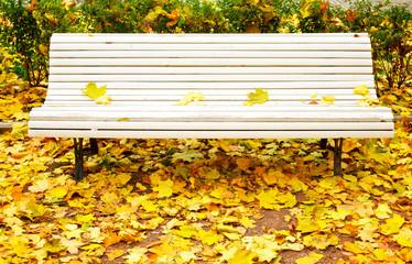 White bench in autumn park