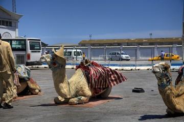 Cammelli di Tunisi
