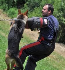entrainement de chien policien