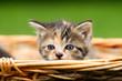 Katzenkind im Körbchen