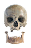 Skull and jaw. poster