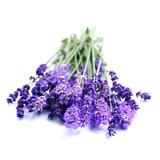 Fototapety Lavendel