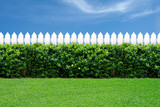 Fototapety White fence and green grass