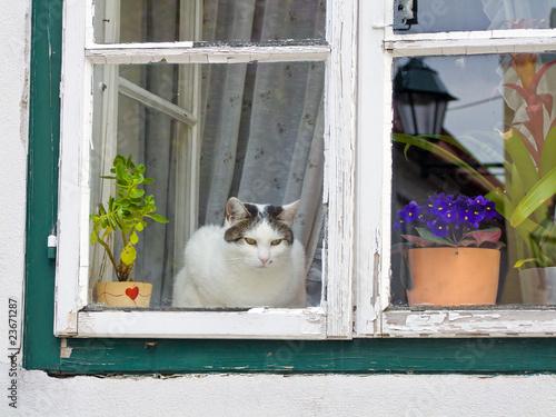 Katze sitzt an einem Fenster