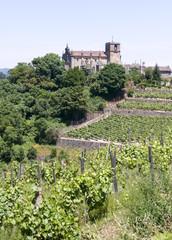 Vineyard on bank of river Minho Galicia Spain