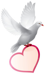 Dove with valentine card