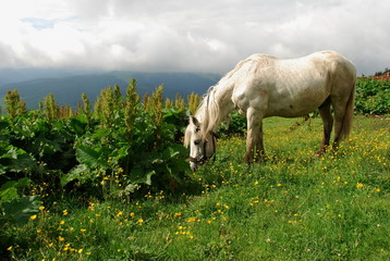 White horse on a green slope
