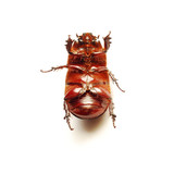 helpless bug poster