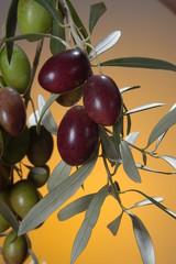 black olive 9