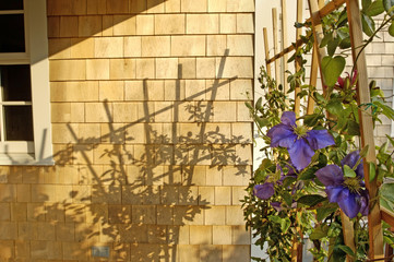 Trellis Casting Shadow on Wood Shingles